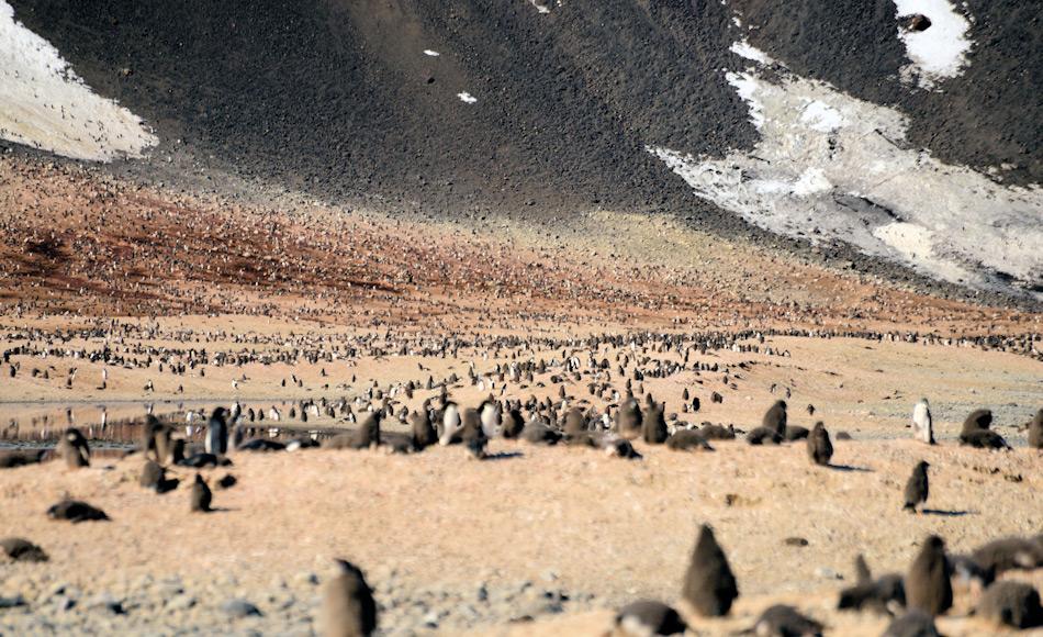 Die grösste Adéliepinguinkolonie in der Ostantarktis ist diejenige bei Kap Adare, wo 1899 Carsten Borchgrevink das erste permanente Gebäude in der Antarktis erstellt hatte. Die Kolonie besteht aus rund einer halben Million Pinguinen jeden Sommer. Doch im Winter ist der Ort ruhig und verlassen, nicht wie im Westen. Bild: Michael Wenger