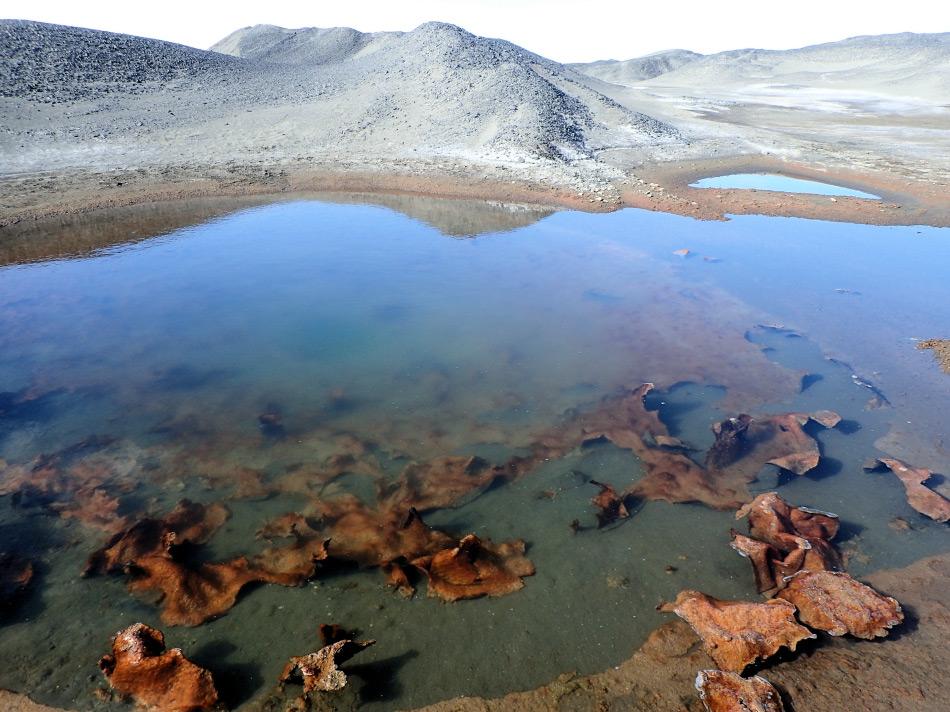 Cyanobakterien (Blaualgen) dominierten die mikrobiellen Mattengemeinschaften am Boden von Schmelztümpeln auf dem McMurdo-Eisschelf. Diese Tümpel haben flüssiges Wasser im Sommer und sind komplett durchgefroren im Winter. Diese Umgebungsbedingungen sind extrem und nur Mikroben wie Cyanobakterien können hier überleben. Bild: Taylor & Francis