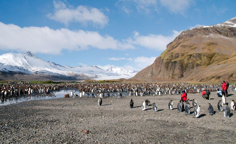 Besuche an Orten wie auf der subantarktischen Insel Südgeorgien sind Höhepunkte für Antarktisreisende. Strenge Regeln und Managementpläne stellen sicher, dass die antarktischen Tiere ungestört sind und so das Wildnis-Erlebnis für die Besucher maximiert wird. Bild: Michael Wenger