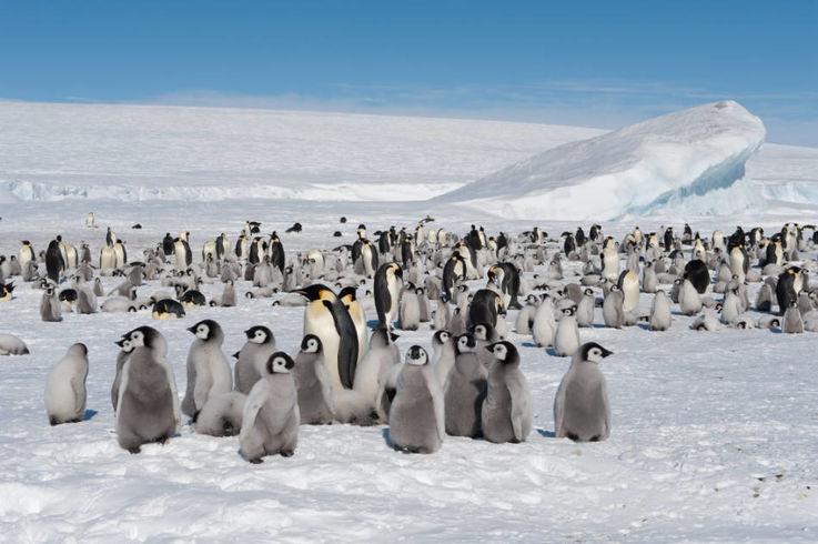 Wenn die Erderwärmung mit derzeitigem Tempo voranschreitet, könnten Kaiserpinguine bis zum Ende