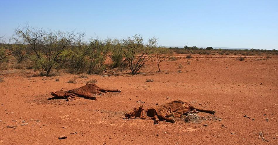 Keine guten Aussichten für die Bauern in Australien; wenn es nach den Hervorsagen der Wissenschaft geht gehört dieses Bild schon bald zum Alltag.
