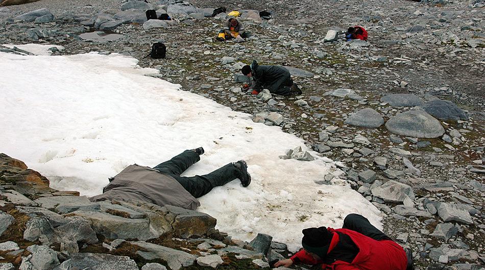 Mitglieder des wissenschaftlichen Teams auf der Suche nach Larven der endemischen Mücke «Belgica Antarctica» in der Nähe der amerikanischen Palmer Station. Foto: Peter Rejcek, NSF