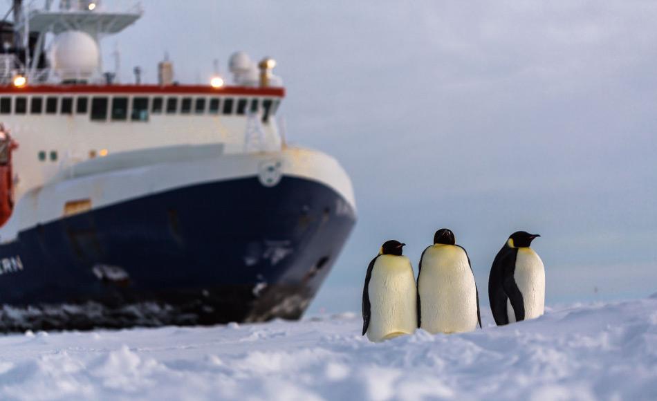 Die Polarstern, das Arbeitspferd des AWI bringt jährlich Gruppen von Forschern für ihre Feldstudien in die Antarktis. Ausserdem versorgt sie auch noch die Neumayer III Station. Bild: Alfred-Wegener-Institut/Stefan Hendricks