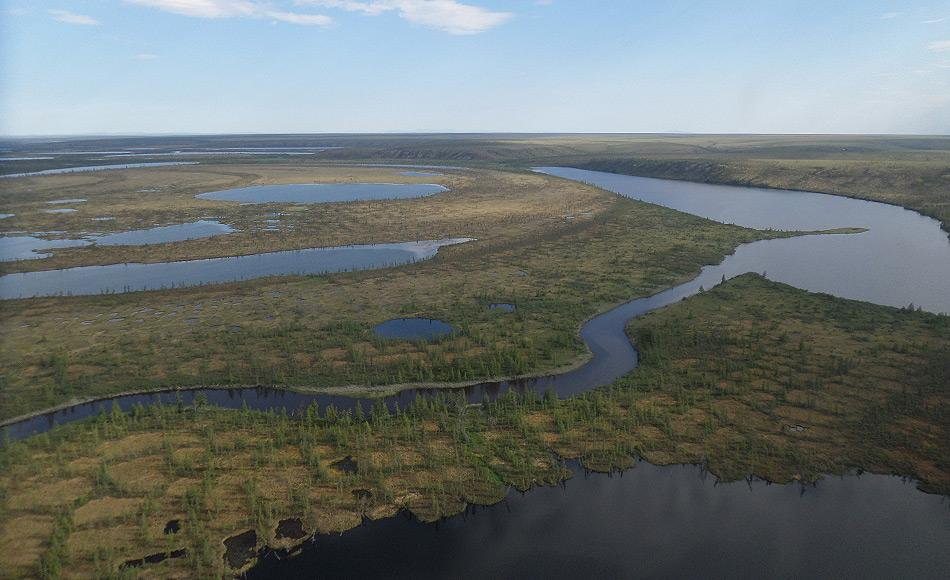 Sollte der Klimawandel in demselben Tempo fortschreiten wie bisher, werden die Lärchenwälder die jetzige Tundra besiedeln und die Fichten und Kiefern die Lärchen ablösen. Die Tundra würde verschwinden. Bild: Heike Zimmermann