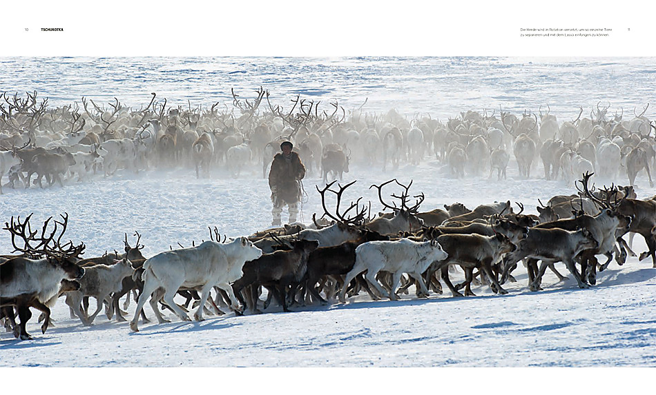 Rentierherde bei den Nomaden in Tschukotka, ganz im Osten von Russland.